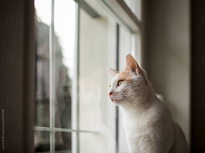 Cat looks out of window in cloudy day. His reflection on the glass. by Laura Stolfi for Stocksy United