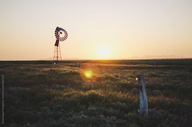 Sunsetting over Australian farm by Dominique Chapman for Stocksy United