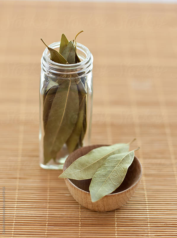 Bay Leaves by Daniel Hurst for Stocksy United
