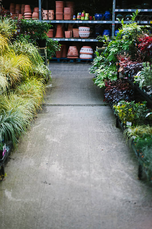 Aisle of plants.  by Darren Muir for Stocksy United