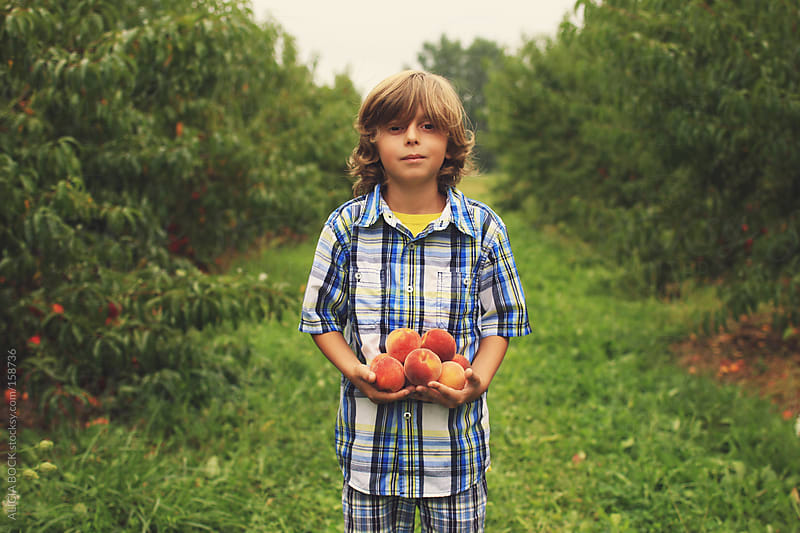 A Boy Picking Peaches by ALICIA BOCK for Stocksy United