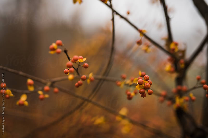 An autumn tree with no leaves by Isaiah & Taylor Photography for Stocksy United