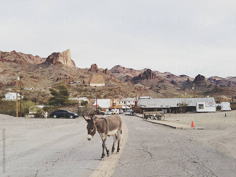 Lone Walking Burro by Kevin Russ for Stocksy United