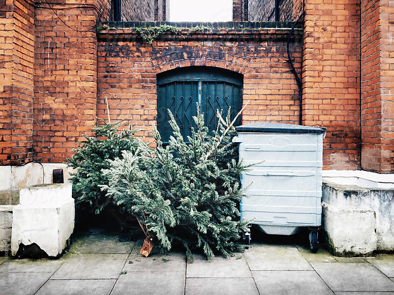 Christmas trees left in the street by James Ross for Stocksy United