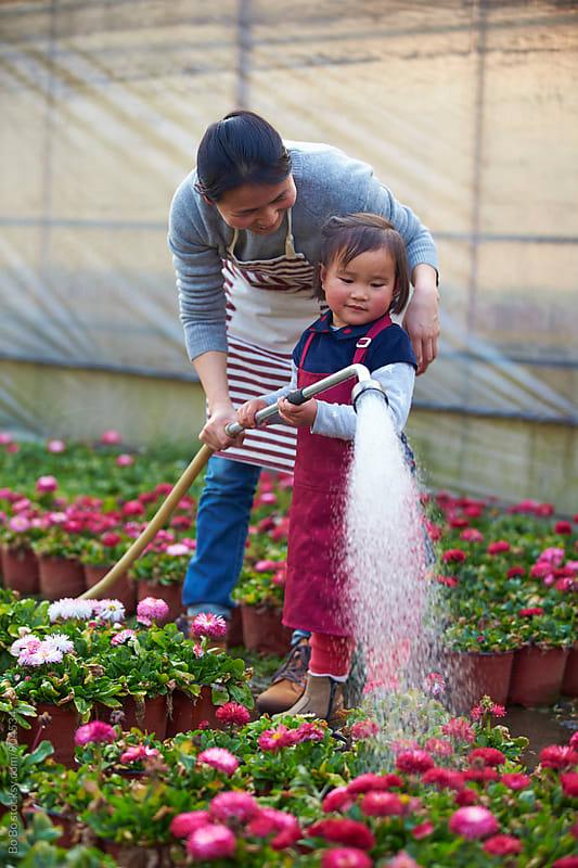 lovely little asian girl watering flower with her mother in the garden by Bo Bo for Stocksy United