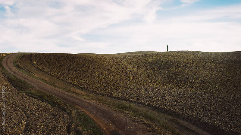 lonely cypress on typical Tuscany landscape by Juri Pozzi for Stocksy United