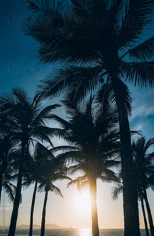 Rio de Janeiro - Silhouette of Coconut Palm Trees at Sunrise by Julien L. Balmer for Stocksy United