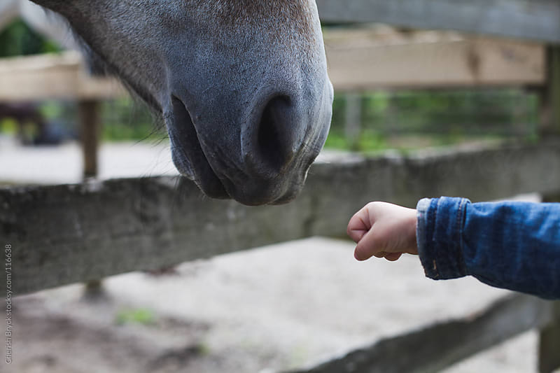 Little girl reaches out her hand to horse. by Cherish Bryck for Stocksy United