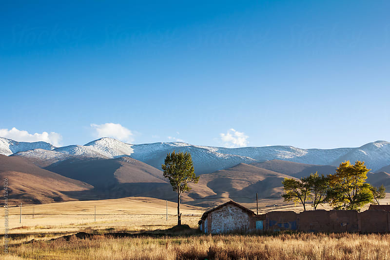pasture beside Qinghai lake by zheng long for Stocksy United