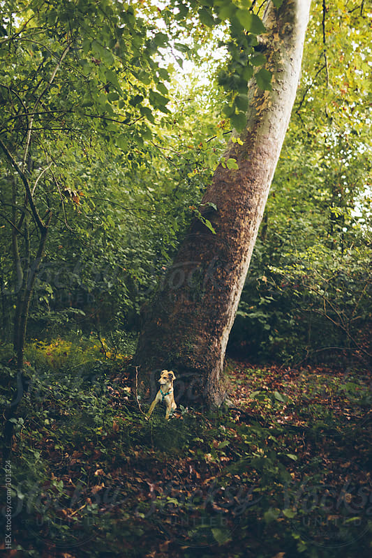 Dog in Front of Big Tree by HEX. for Stocksy United