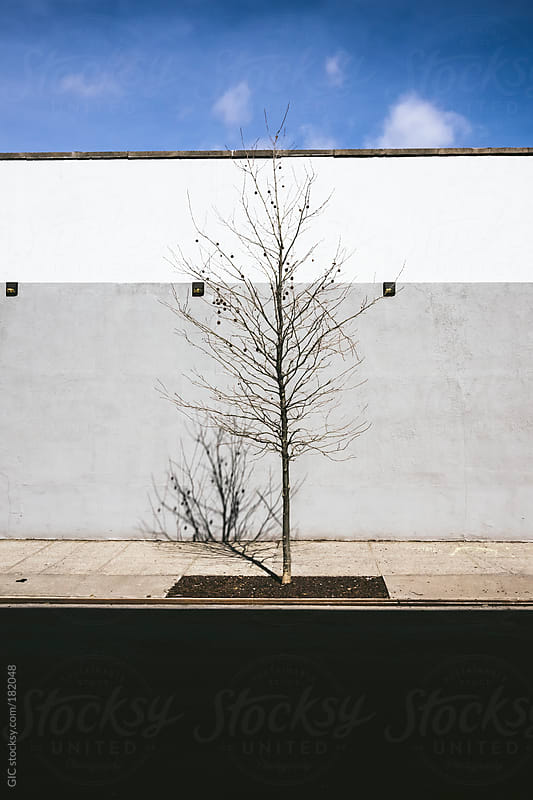 Lonely bare tree in the city by GIC for Stocksy United