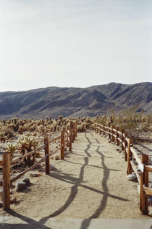Walkway Through the California Desert by Benj Haisch for Stocksy United