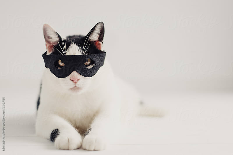 Cat burglar  by Melanie DeFazio for Stocksy United
