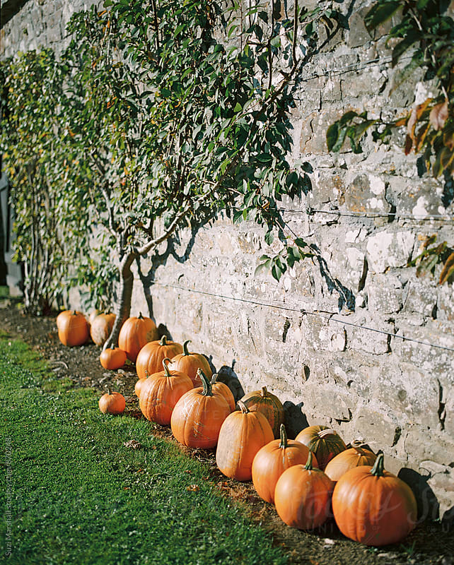 Pumpkins against a wall in a garden by Suzi Marshall for Stocksy United