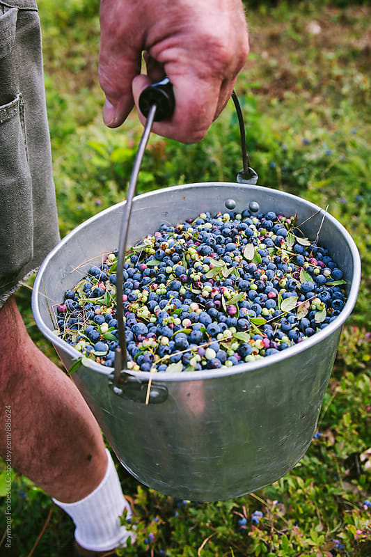 Bucket O' Maine Wild Blueberries by Raymond Forbes LLC for Stocksy United