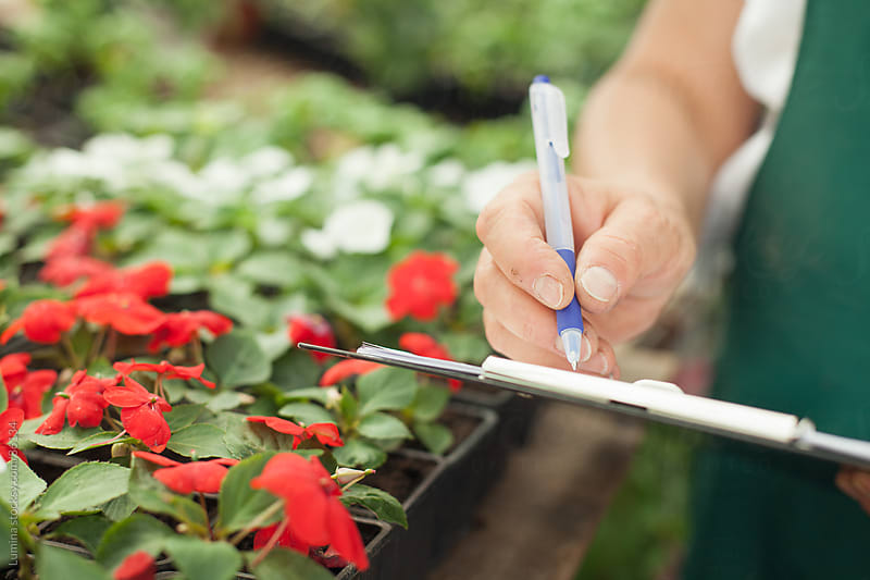 Florist Classifying Flowers by Lumina for Stocksy United