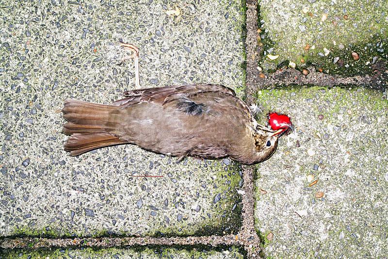 Dead Bird by Rogier Maaskant Photography/Film/Concept for Stocksy United
