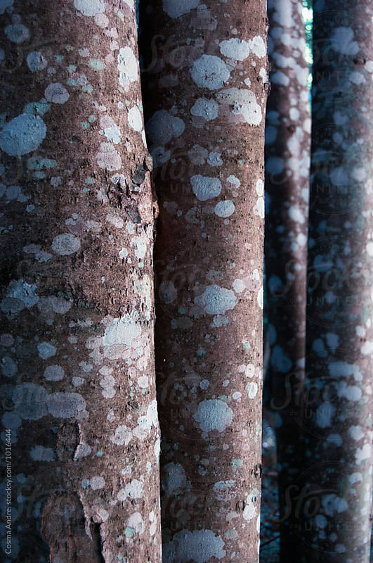 Abstract tree trunks detail by Cosma Andrei for Stocksy United