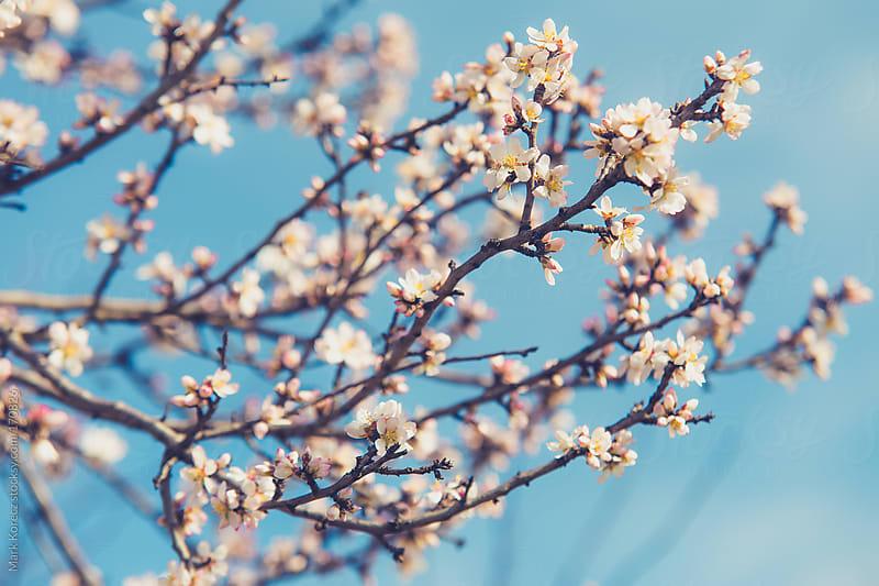 Spring flowers by Mark Korecz for Stocksy United