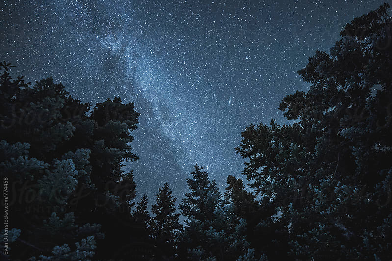 Dark Cold Forest With Stars Above by Evan Dalen for Stocksy United
