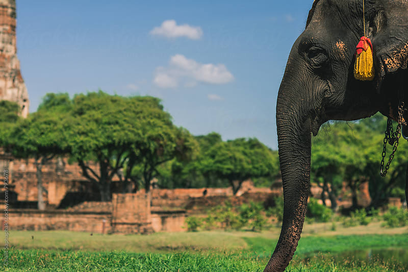 Elephant trekking by Chalit Saphaphak for Stocksy United
