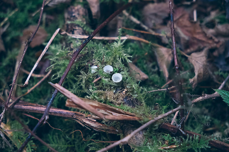 Small fungus on the forest floor by Shelly Perry for Stocksy United