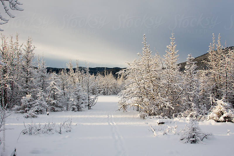 Winter wonderland - snow covered forest and ski trail at sunset in the winter by Mihael Blikshteyn for Stocksy United
