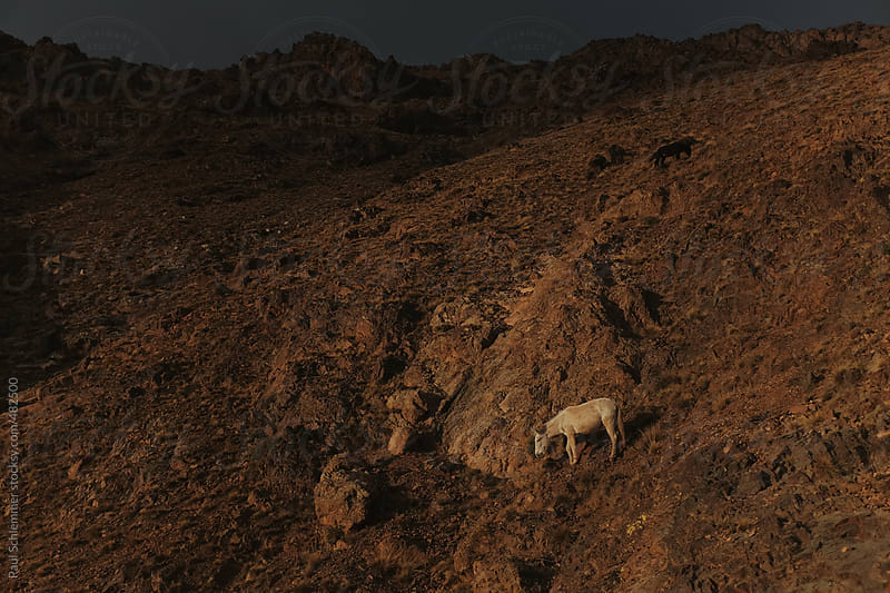 horse of morocco by Paul Schlemmer for Stocksy United