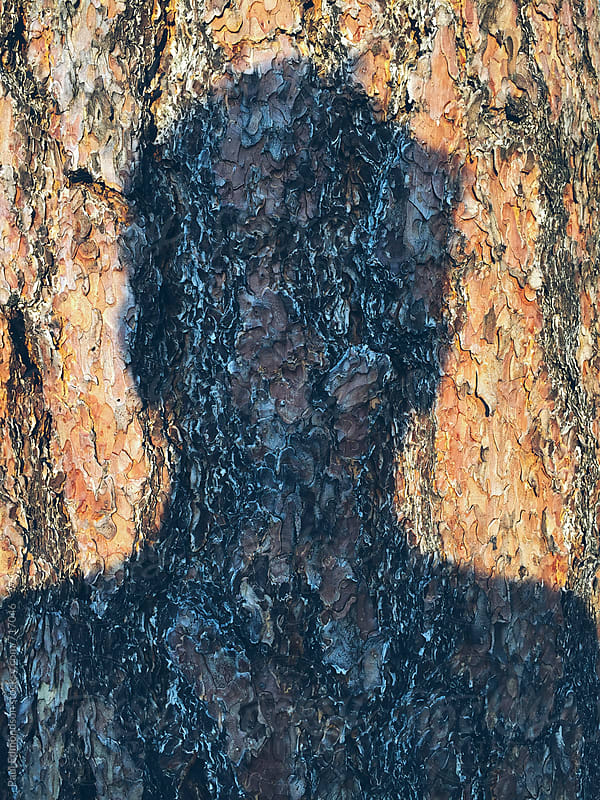 Shadow of man's head on old growth Ponderosa pine tree by Paul Edmondson for Stocksy United