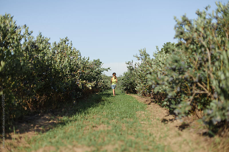 A girl walking down a row of bushes at a blueberry farm by Amanda Worrall for Stocksy United