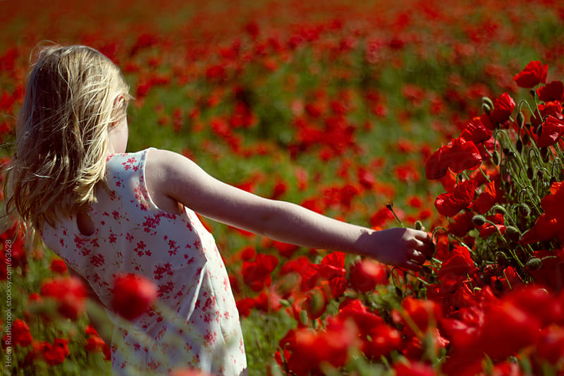 Poppies by Helen Rushbrook for Stocksy United