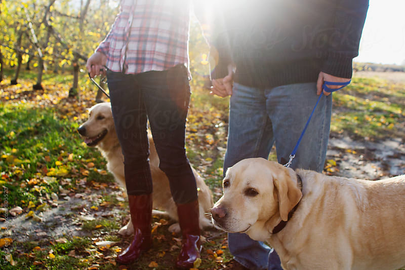 Dogs on leashes stand by owners by Tana Teel for Stocksy United