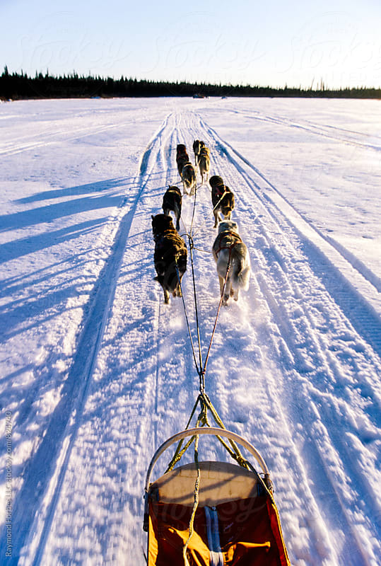 Alaskan Sled Dog Team by Raymond Forbes LLC for Stocksy United