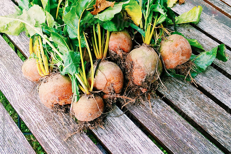 Freshly havested golden beets by Harald Walker for Stocksy United
