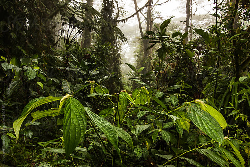 A green and lush cloud forest by Jonatan Hedberg for Stocksy United