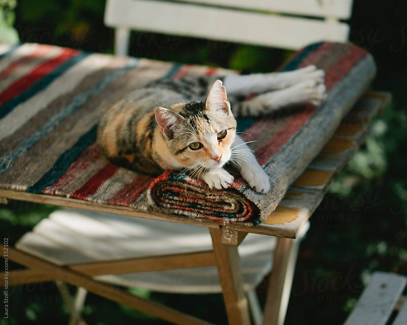 Tabby cat laying on carpet on wooden table looks straight at the camera by Laura Stolfi for Stocksy United