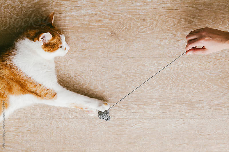 Kitty cat playing with a mouse wool by Alberto Bogo for Stocksy United