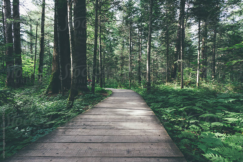 wooden footpath through the forest by unite images for Stocksy United