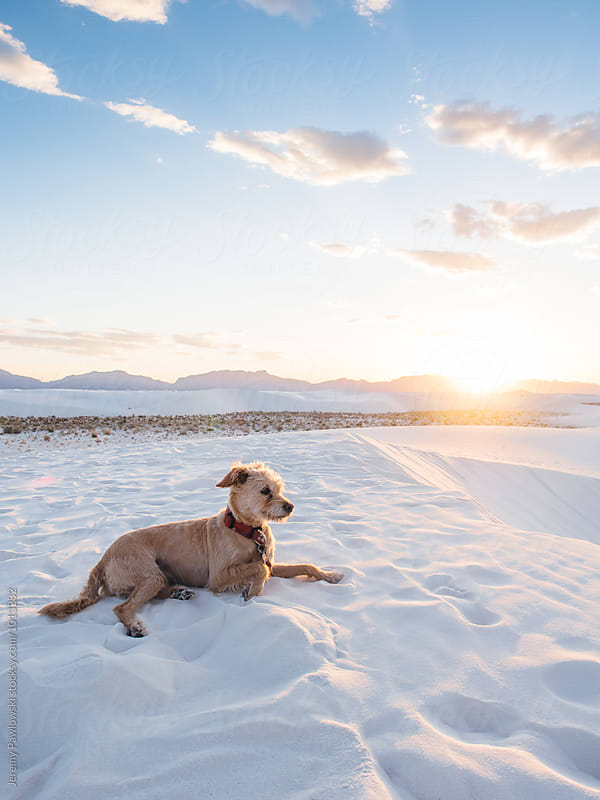 Dog laying in white sands with sunset and mountains by Jeremy Pawlowski for Stocksy United