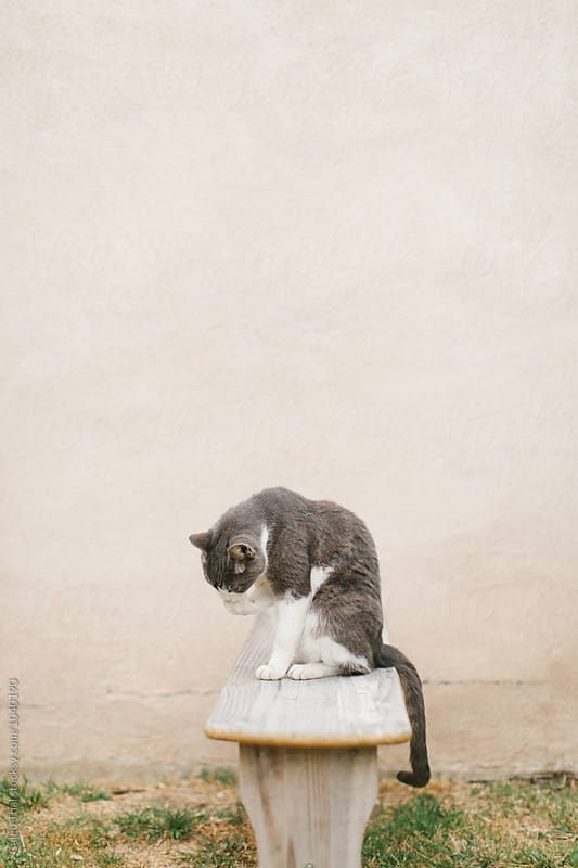 Cat on Stoop Licking Paw by Caleb Thal for Stocksy United
