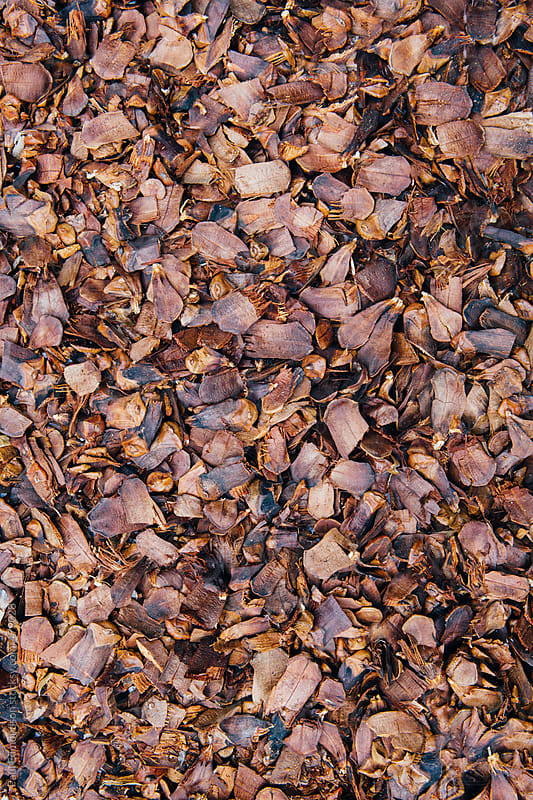 Crushed and broken pine cones, close up by Paul Edmondson for Stocksy United
