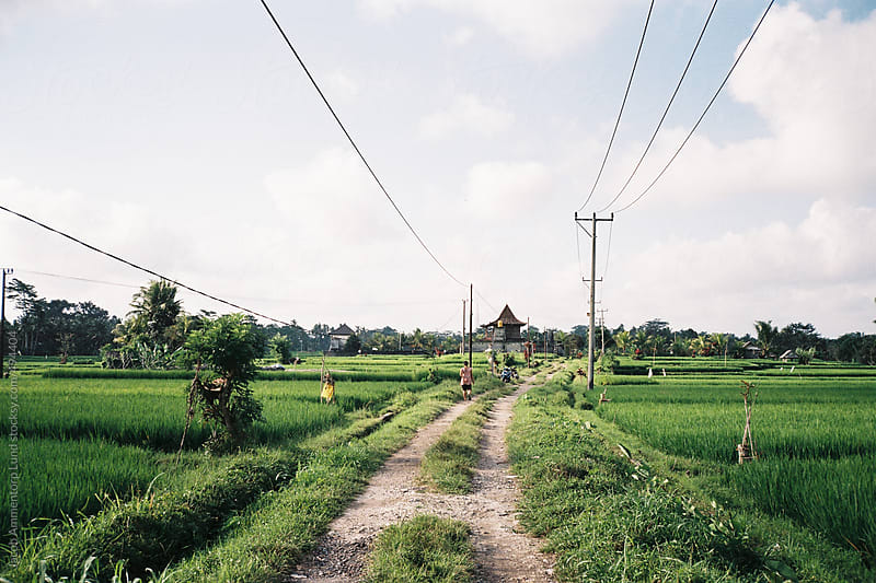 Road through rice fields in Bali by Jacob Ammentorp Lund for Stocksy United