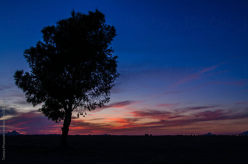Silhouette Of A Tree At Sunset by Tamara Pruessner for Stocksy United