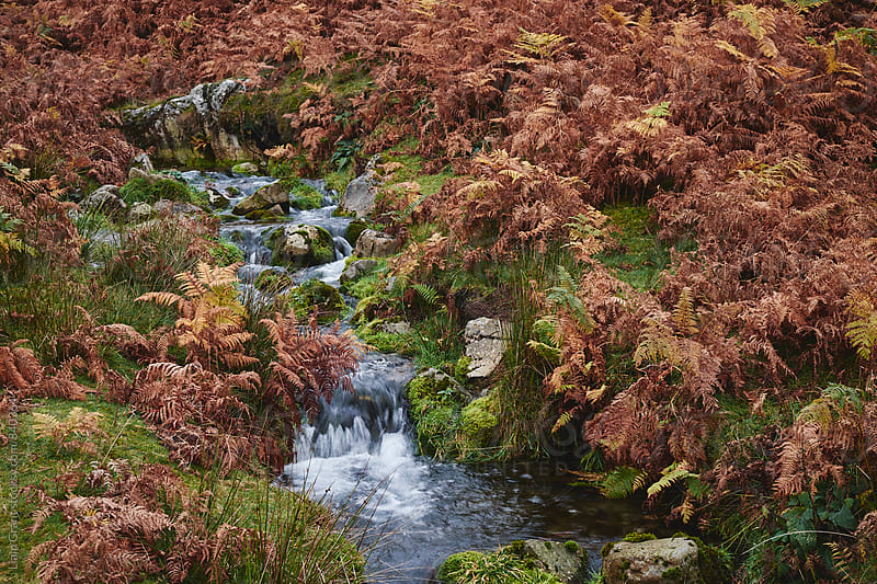 Autumnal bracken and mountain stream. Cumbria, UK. by Liam Grant for Stocksy United