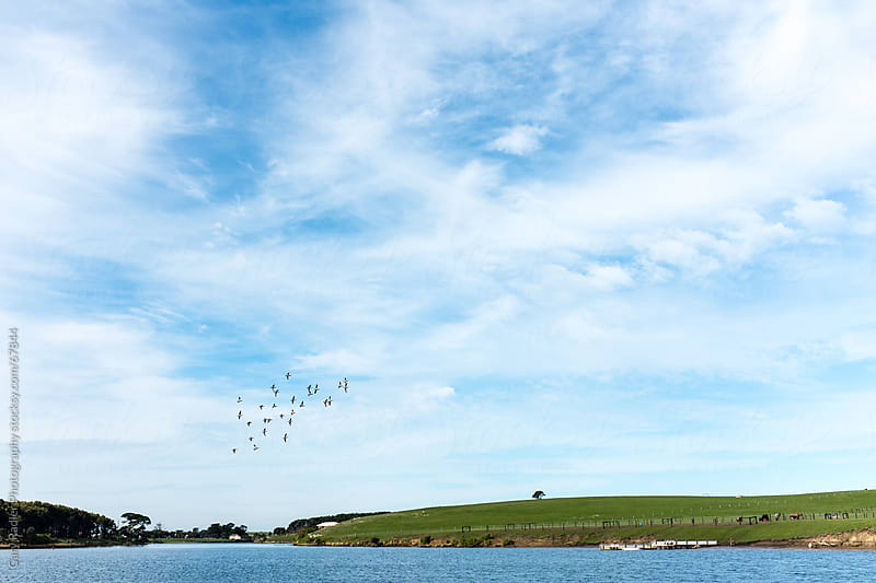 Flock of Birds over a River in Australia by Gary Radler Photography for Stocksy United