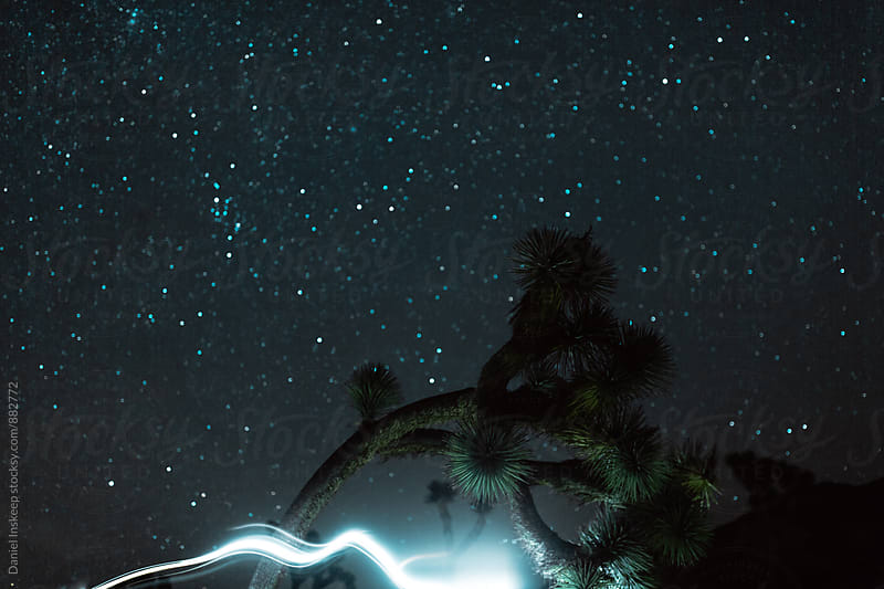 Light Painting Around a Joshua Tree by Daniel Inskeep for Stocksy United