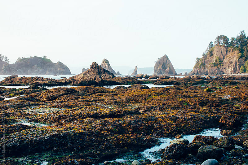 A Rocky Ocean Shore Along The Coast Of Washington State by Luke Mattson for Stocksy United