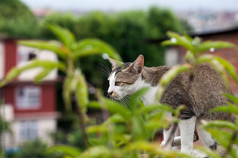 A cautious cat on the terrace. by Shikhar Bhattarai for Stocksy United