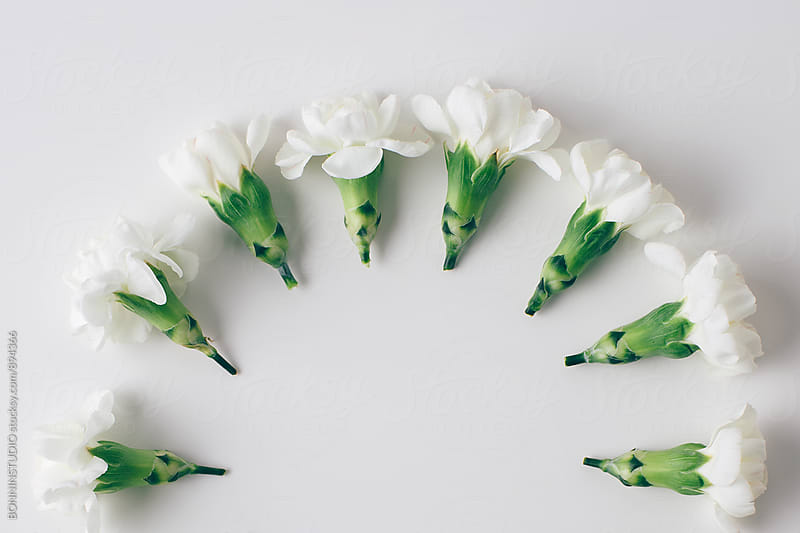 White flowers from above. by BONNINSTUDIO for Stocksy United