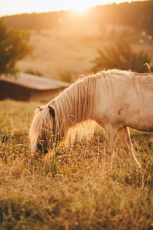 Pony by sunrise in a meadow by Aleksandar Novoselski for Stocksy United
